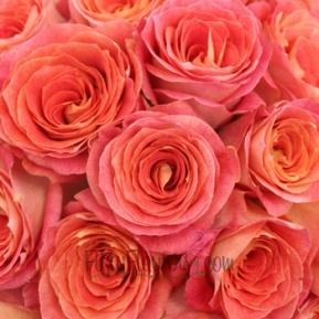 Big_Fun_Coral_Pink_Rose_Close350_187f36ea